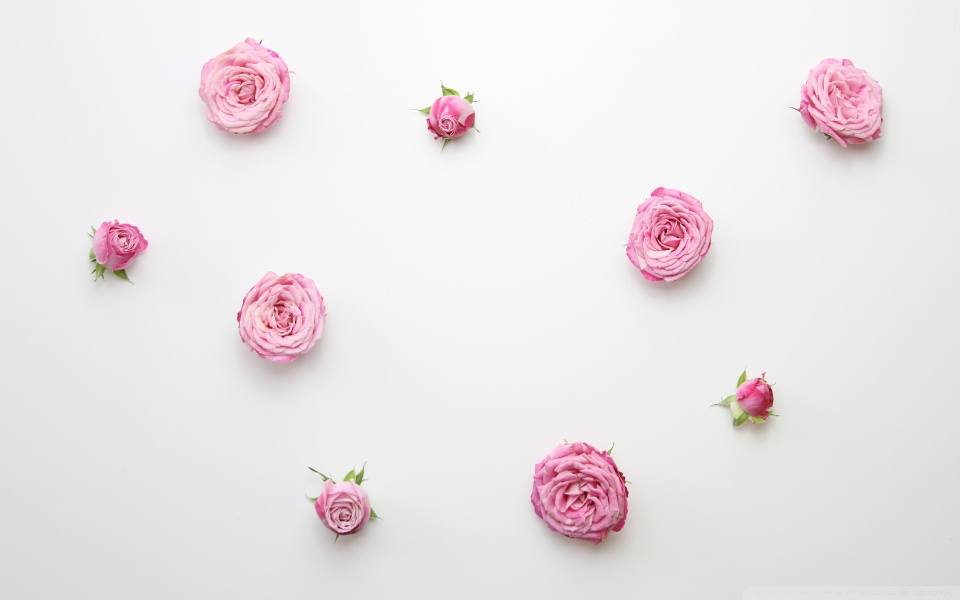 Now Here Is A Wallpaper That Going To Be Loved By People Who Want Their Screens Minimalist Yet Beautiful These Pink Flowers Will Make Your