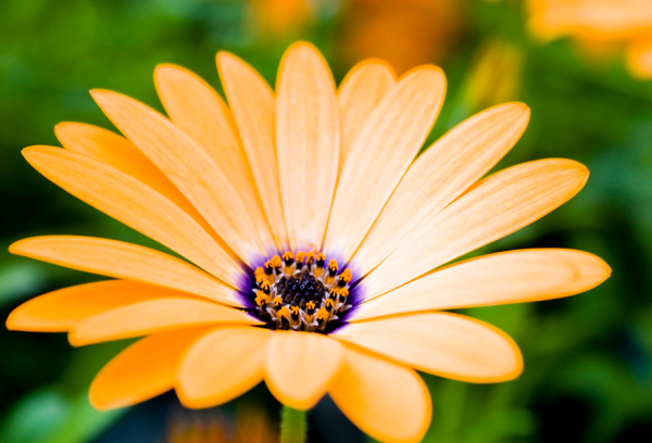 25 Beautiful Flowers Wallpapers For Your Screens Simplefreethemes
