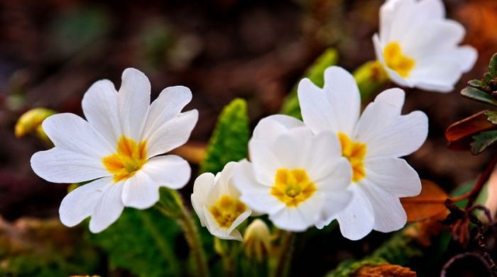 25 beautiful flowers wallpapers for your screens simplefreethemes here is a stunning wallpaper of beautiful white spring flowers that will bring a new changed look to your screens you can download this wallpaper in any mightylinksfo